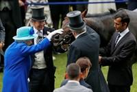 Nữ hoàng Anh thắng gần 9 triệu USD nhờ nuôi ngựa đua