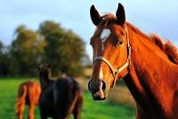 7 bài học kinh doanh từ... loài ngựa