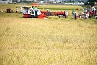 Tập trung ruộng đất bằng cách cởi mở chuyển quyền sử dụng đất chỉ nên áp dụng ở mức độ nhất định