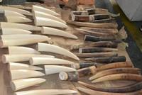 Cựu cán bộ hải quan đánh tráo ngà voi, đút túi 2,9 tỷ đồng