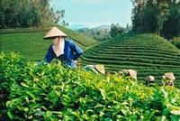 Cổ phần hoá doanh nghiệp nông nghiệp vượt chỉ tiêu