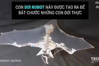 Dơi robot bay như dơi thật