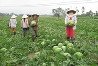 Tư duy làm nông nghiệp mới