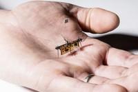 Ruồi robot đầu tiên trên thế giới có khả năng khảo sát sự phát triển và kiểm tra mầm bệnh của cây trồng