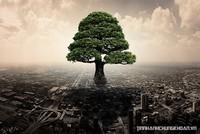 Phát triển đô thị thích ứng và bền vững