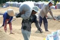 Được mất chính sách thu mua gạo tạm trữ