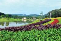 Flamingo Đại Lải Resort chính thức mở bán biệt thự Forest