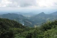 Quảng Nam muốn thu hồi đất trồng rừng của Innovgreen