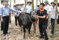 Ngày 24/9, Công ty Giống gia súc Hà Nội sẽ bán đấu giá hơn 2,2 triệu cổ phần