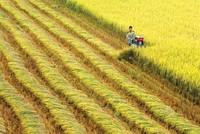 Đồng bằng sông Cửu Long tận dụng ưu thế về nông nghiệp