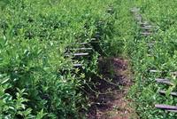 Chủ tịch Solavina: Chuyển dịch sang nông nghiệp là bước đột phá!