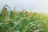 Hội nhập bắt đầu từ… nông dân