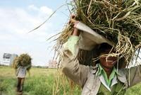Tài chính vi mô và phát triển nông nghiệp, nông thôn ở Việt Nam