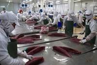 EU cảnh báo về cá chết, Vasep khẳng định hải sản xuất khẩu đảm bảo chất lượng
