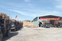 Phú Yên khánh thành nhà máy chế biến nguyên liệu gỗ xuất khẩu Bảo Châu vốn 100 tỷ đồng
