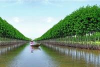 Cà Mau đề xuất đầu tư xây dựng cảng Hòn Khoai vào danh mục dự án PPP