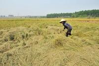 Tín dụng cho nông nghiệp, vẫn nặng về hỗ trợ