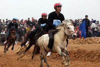 Ký kết MOU dự án trường đua ngựa quốc tế 1,5 tỷ USD ở Vĩnh Phúc