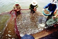Bộ Nông nghiệp trình Kế hoạch hành động để tôm mang về 10 tỷ USD