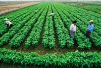 Vốn tư nhân dần chảy vào nông nghiệp