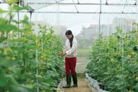 Nông nghiệp công nghệ cao: Không lo thiếu vốn, chỉ sợ đầu ra