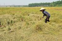 Nhiều đề xuất hoàn thiện nghị định về bảo hiểm nông nghiệp