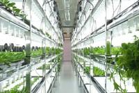 Nhà máy trồng rau không cần mặt trời, tiết kiệm 95% nước, năng suất gấp 100 lần trang trại khác