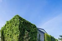 Xưởng may xanh mướt bị nhầm là resort ở Sài Gòn
