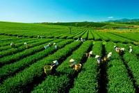 Tăng cường quản lý đất đai có nguồn gốc nông, lâm trường quốc doanh