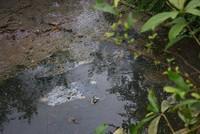 Phạt các cơ sở gây ô nhiễm sông Bưởi gần 4 tỷ