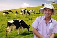 Hoàng Anh Gia Lai muốn chuyển từ trồng cỏ nuôi bò sang trông cây ăn quả