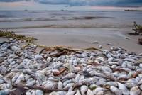 Nhiều mẫu cá tại Hà Tĩnh nhiễm chất độc xyanua, phenol