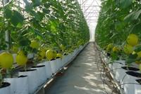 Ngân hàng Nhà nước sẽ có hướng dẫn về gói 100.000 tỷ đồng cho nông nghiệp công nghệ cao