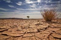 Việt Nam cần tăng cường hoạt động ứng phó với biến đổi khí hậu