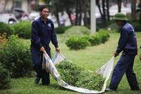Hà Nội cắt cỏ trở lại: Người dân đỡ cảnh bị cỏ bít lối