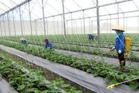 Chính sách còn bao bọc, thời tiết bất lợi nhưng nông nghiệp 2017 sẽ về đích thành công