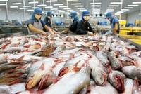 Cơ chế giám sát cá tra, cá basa Việt Nam của Hoa Kỳ là không cần thiết