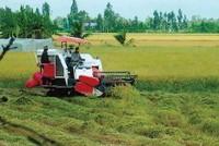Nông nghiệp - chuyện của cả nền kinh tế