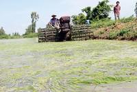 524 tỷ đồng hỗ trợ 34 tỉnh khắc phục hạn hán, xâm nhập mặn