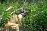 Hà Nội: Kiểm tra việc rừng phòng hộ Sóc Sơn bị băm nát