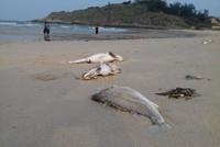 Vụ cá chết hàng loạt: Bộ Công an vào cuộc
