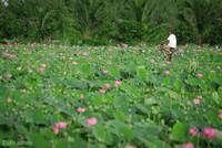 3 gợi ý 'đi trốn' giữa thiên nhiên ngay gần Sài Gòn