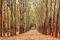 Những mùa thay lá quyến rũ nhất Việt Nam