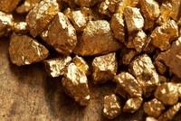 Công ty đào vàng bị đòi gần 200 tỷ USD thuế