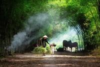 Những bức ảnh ấn tượng vòng chung khảo 'Dấu ấn Việt Nam'