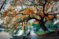 Hồ Gươm quyến rũ trong hương sắc mùa thu