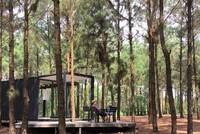 Khu rừng thông bên hồ - điểm chơi cuối tuần gần Hà Nội