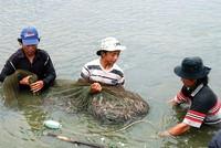 Dừng thí điểm bảo hiểm thủy sản vì rủi ro cao