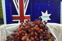 Metro và Klever Fruits tham gia chương trình nho tươi Australia – Now! In Season