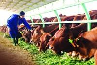 Công ty nông nghiệp của bầu Đức tiếp tục lỗ gần 130 tỷ đồng trong quý III